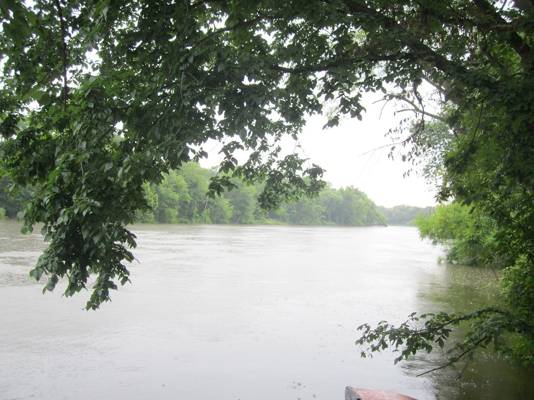 Anacostia Watershed Society - Anacostia River Under Trees